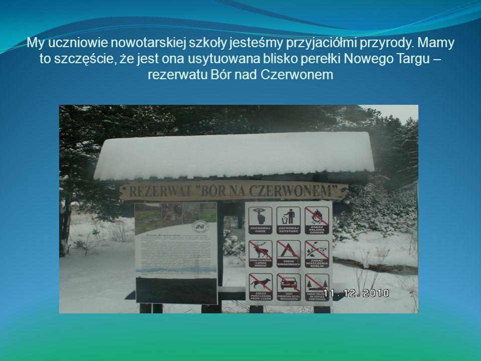 My uczniowie nowotarskiej szkoły jesteśmy przyjaciółmi przyrody. Mamy to szczęście, że jest ona usytuowana blisko perełki Nowego Targu – rezerwatu Bór