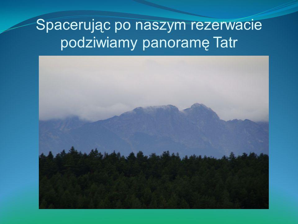 Spacerując po naszym rezerwacie podziwiamy panoramę Tatr