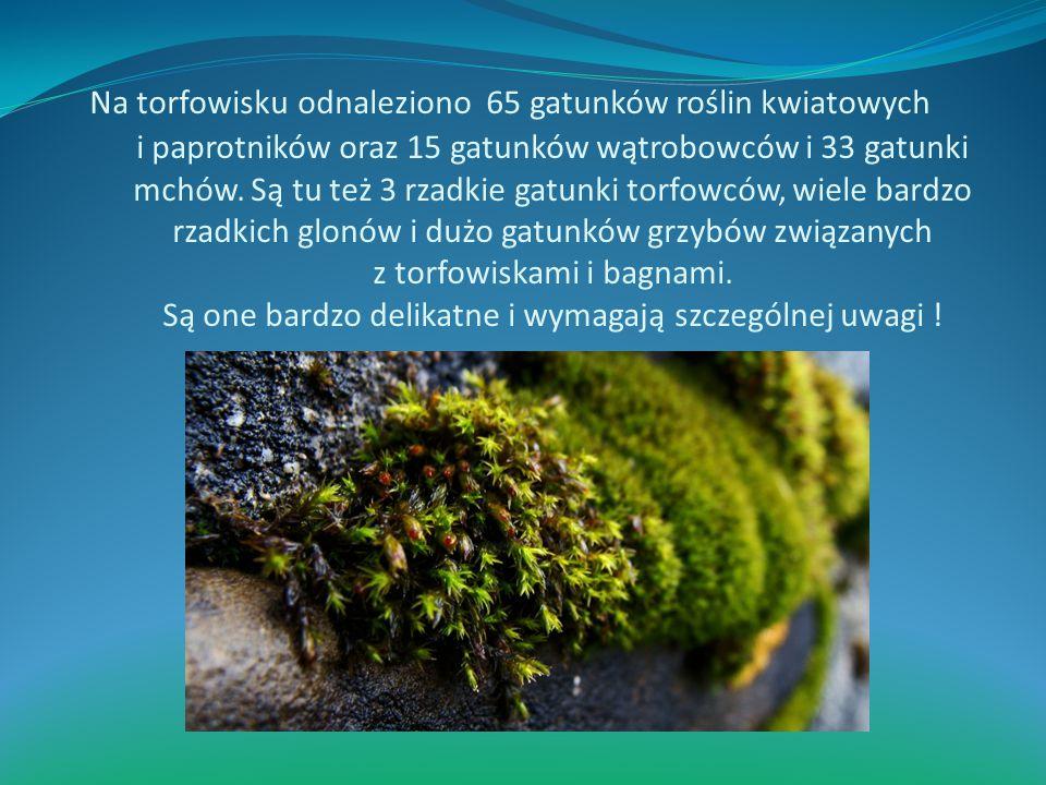Na torfowisku odnaleziono 65 gatunków roślin kwiatowych i paprotników oraz 15 gatunków wątrobowców i 33 gatunki mchów.