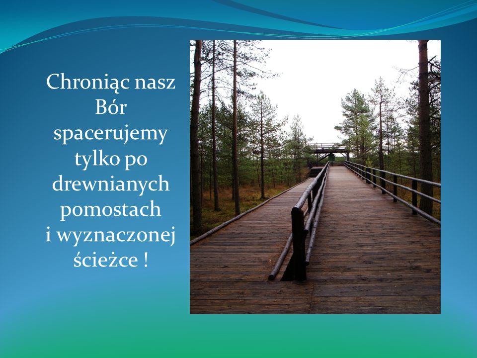 Chroniąc nasz Bór spacerujemy tylko po drewnianych pomostach i wyznaczonej ścieżce !