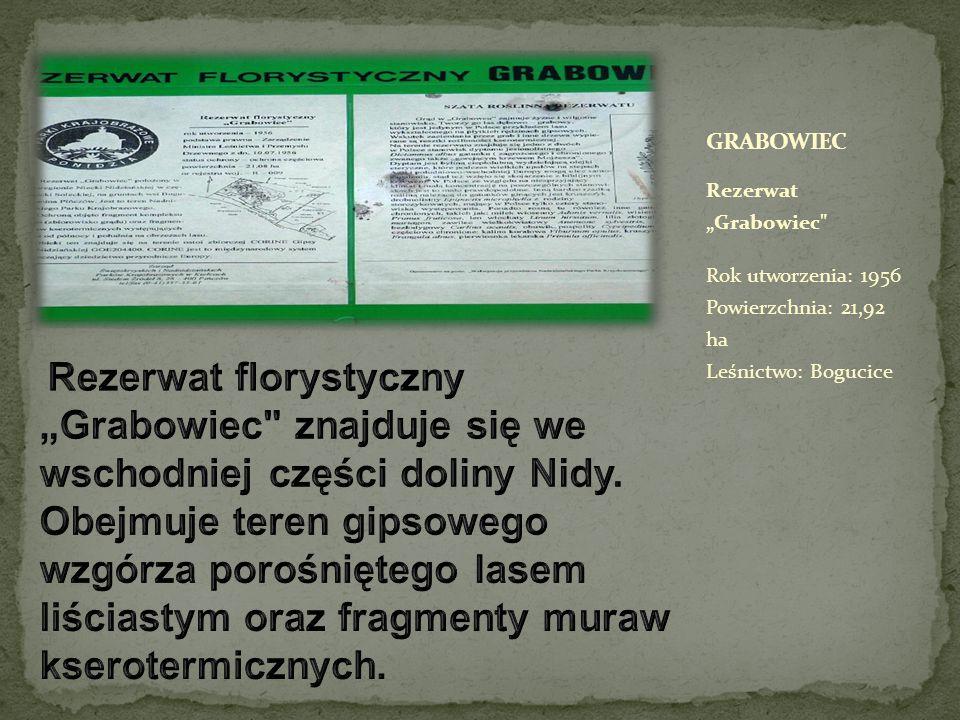 """Rezerwat """"Grabowiec Rok utworzenia: 1956 Powierzchnia: 21,92 ha Leśnictwo: Bogucice"""
