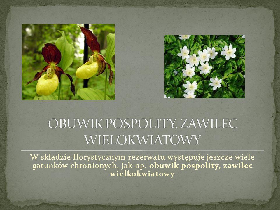 W składzie florystycznym rezerwatu występuje jeszcze wiele gatunków chronionych, jak np.