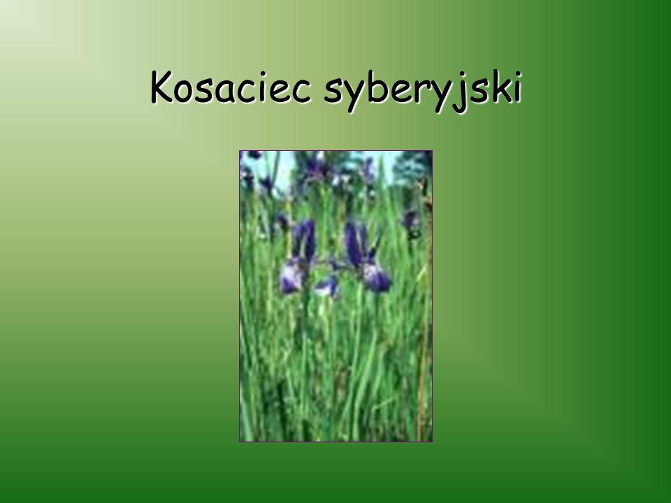 Łąka Sulistrowicka Jest to rezerwat florystyczny położony powyżej wsi Sulistrowiczki. Przez teren rezerwatu przepływają dwa strumyki, a jego flora odz