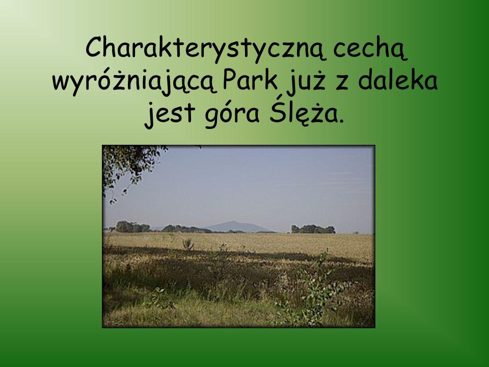 Ślężański Park Krajobrazowy został utworzony uchwałą Wojewódzkiej Rady Narodowej we Wrocławiu z dnia 8 czerwca 1988 roku, utworzono go w celu ochrony