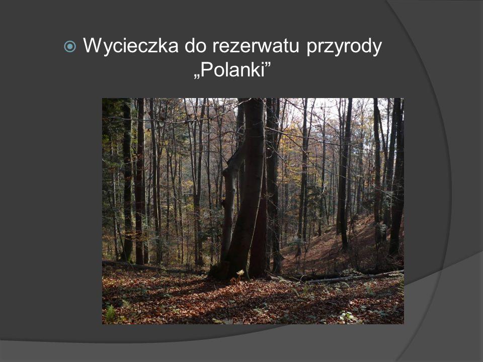 """ Wycieczka do rezerwatu przyrody """"Polanki"""""""