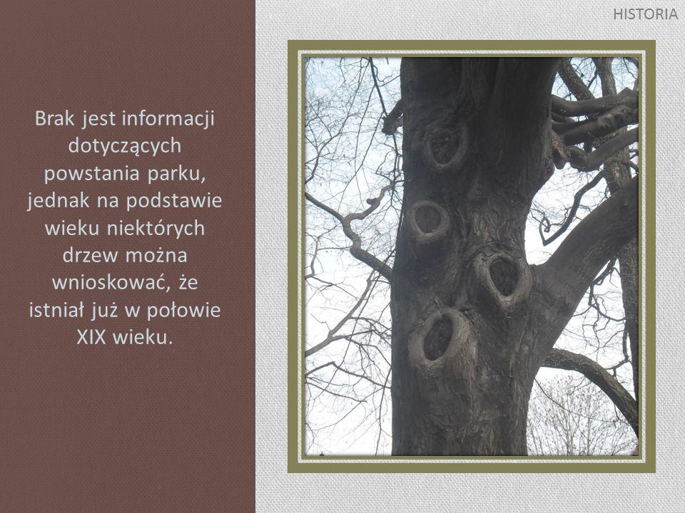 Brak jest informacji dotyczących powstania parku, jednak na podstawie wieku niektórych drzew można wnioskować, że istniał już w połowie XIX wieku.