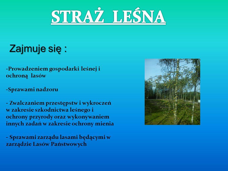 - Przeprowadzenie inwentaryzacji zieleni - Organizowanie wycieczek przyrodniczo- krajoznawczych - Akcje porządkowe w parkach narodowych, na terenach z