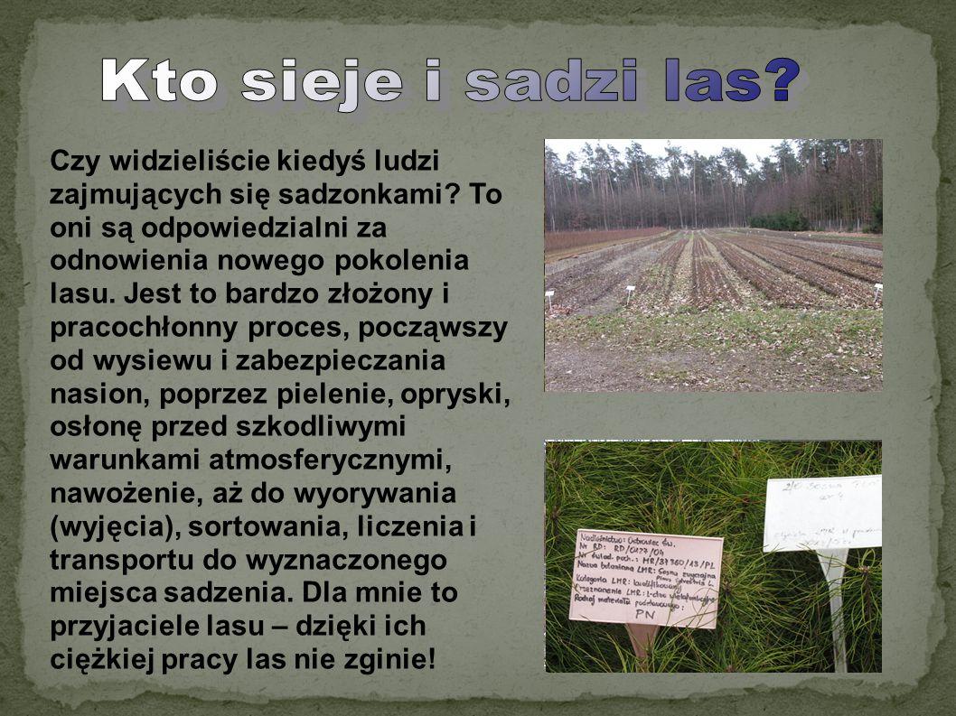 Czy widzieliście kiedyś ludzi zajmujących się sadzonkami? To oni są odpowiedzialni za odnowienia nowego pokolenia lasu. Jest to bardzo złożony i praco