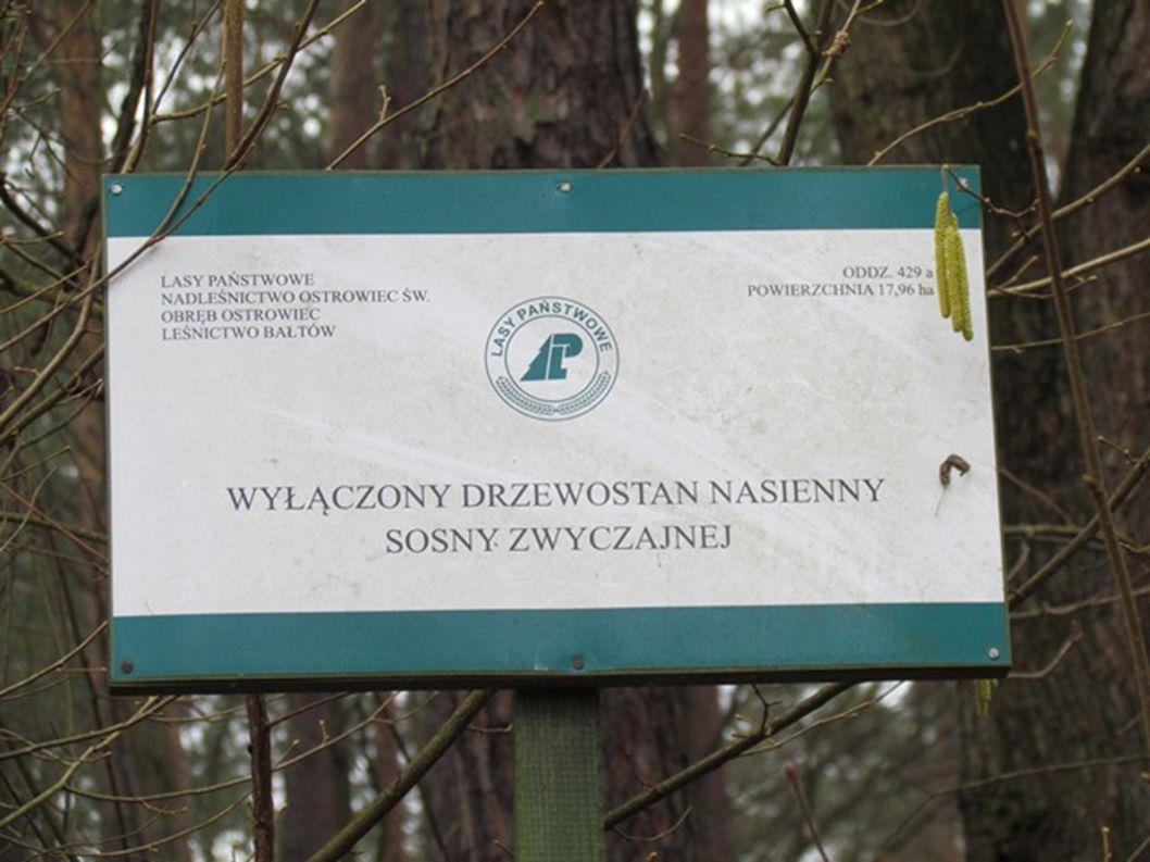 W lesie w wyznaczonych miejscach stoi lizawka i paśnik, do których przed zimą jedzenie dosypują leśnicy oraz myśliwi.