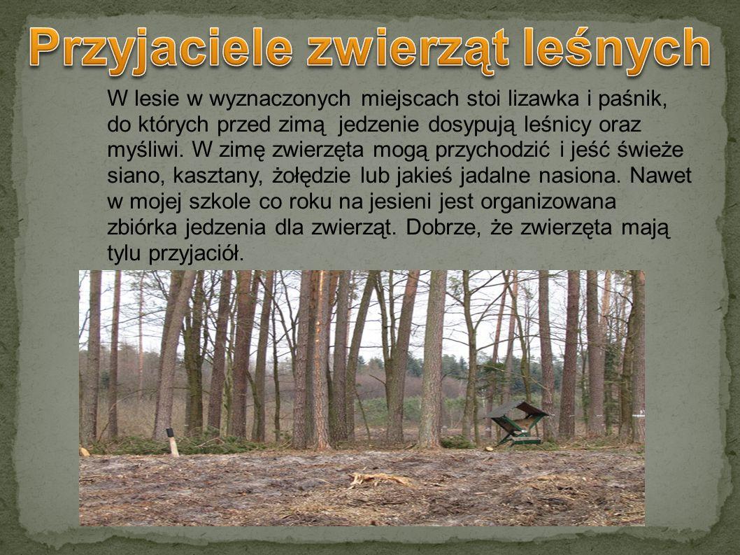 W lesie w wyznaczonych miejscach stoi lizawka i paśnik, do których przed zimą jedzenie dosypują leśnicy oraz myśliwi. W zimę zwierzęta mogą przychodzi