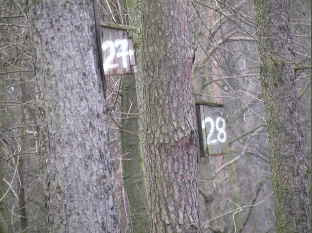 Budki lęgowe są zakładane przez osoby pracujące w lesie. Na wiosnę ptaki nie muszą robić sobie gniazd, tylko mieszkają razem z małymi ptaszkami w drew
