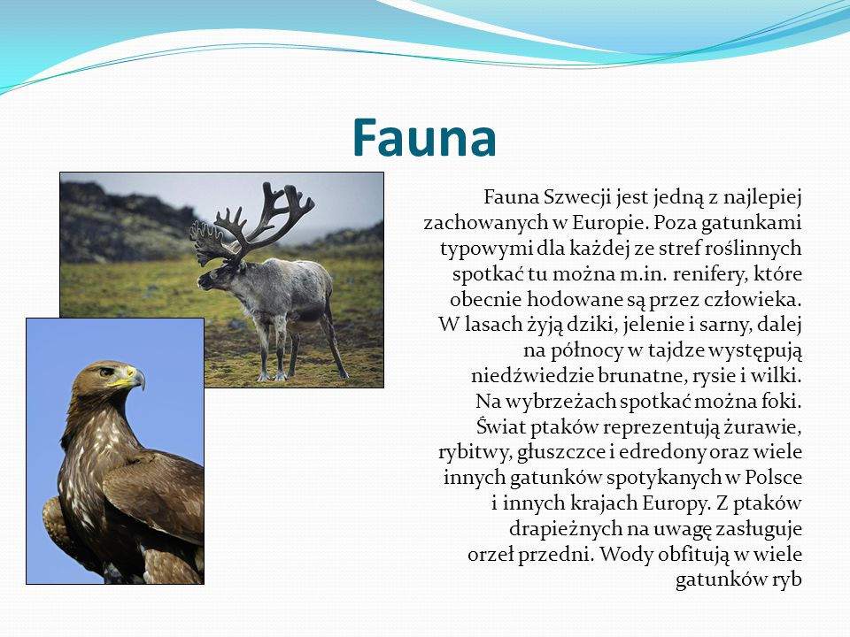 Fauna Fauna Szwecji jest jedną z najlepiej zachowanych w Europie. Poza gatunkami typowymi dla każdej ze stref roślinnych spotkać tu można m.in. renife