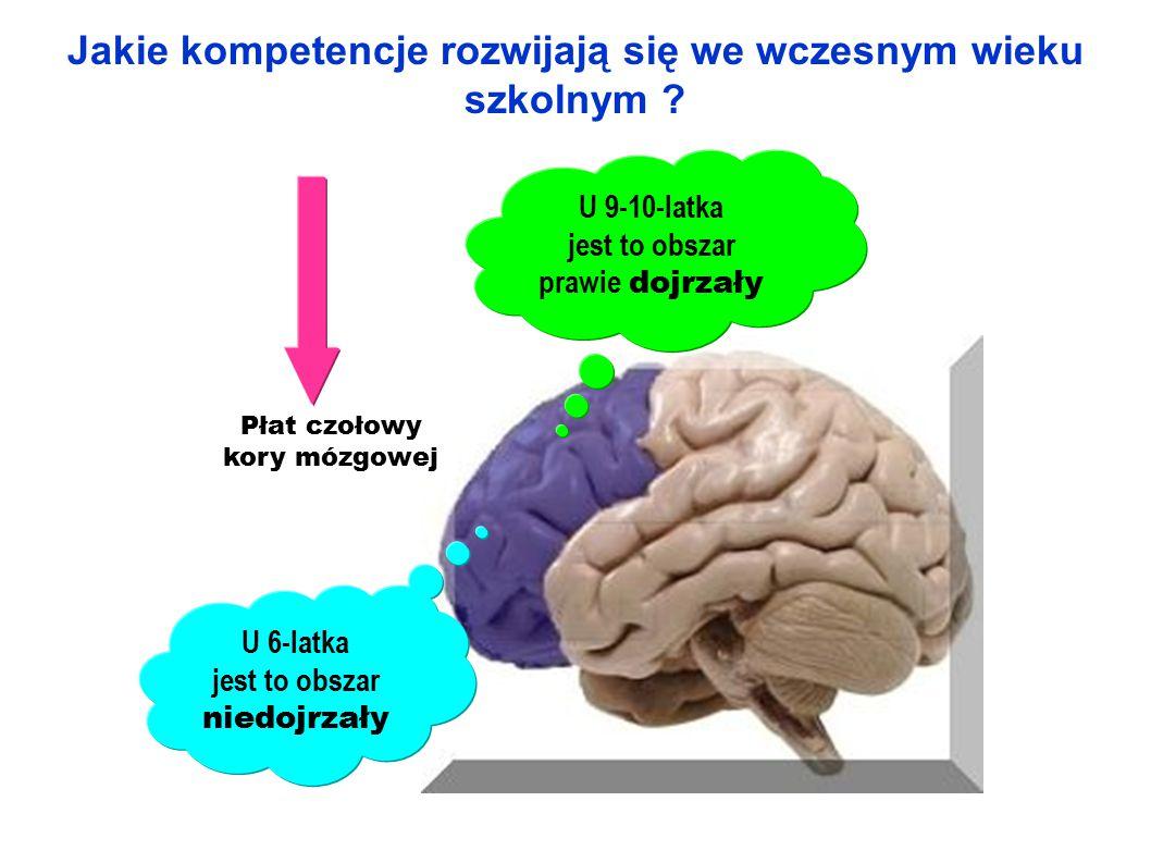Za co odpowiada kora mózgowa przedczołowa.