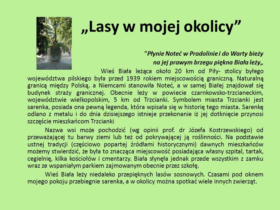 Sosna zwyczajna – 80 % drzewostanu W wielkopolskich lasach zdecydowanie przeważa sosna zwyczajna, która stanowi aż 80% przeciętnego drzewostanu, a w Puszczy Noteckiej nawet 95%.