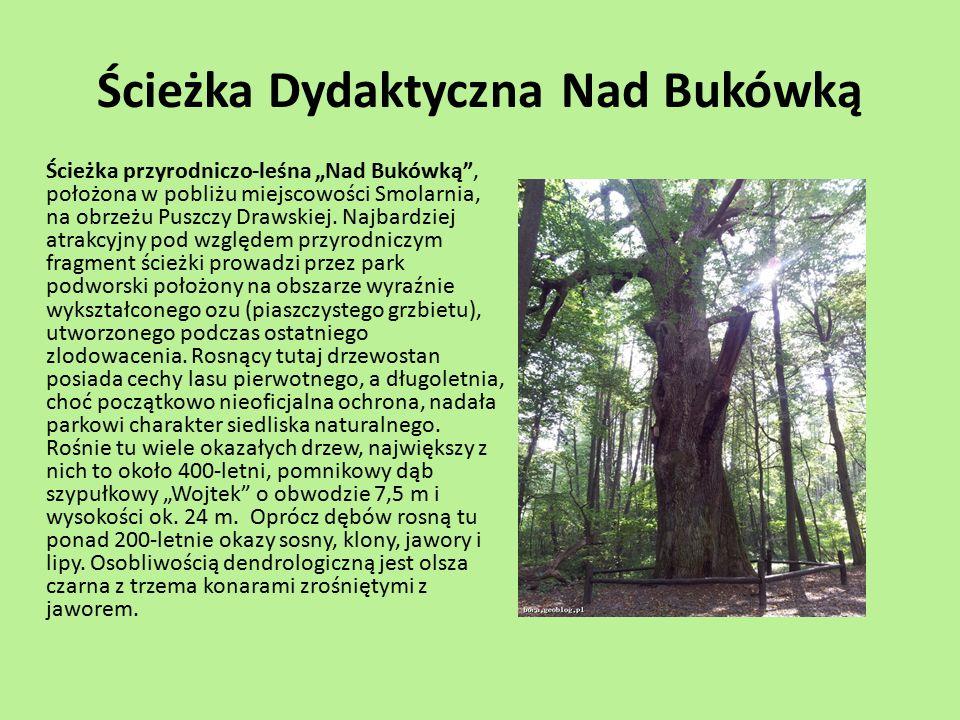 """Ścieżka Dydaktyczna Nad Bukówką Ścieżka przyrodniczo-leśna """"Nad Bukówką"""", położona w pobliżu miejscowości Smolarnia, na obrzeżu Puszczy Drawskiej. Naj"""