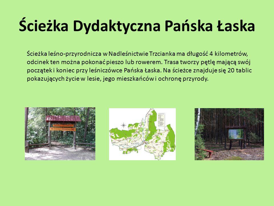 Ścieżka Dydaktyczna Pańska Łaska Ścieżka leśno-przyrodnicza w Nadleśnictwie Trzcianka ma długość 4 kilometrów, odcinek ten można pokonać pieszo lub ro