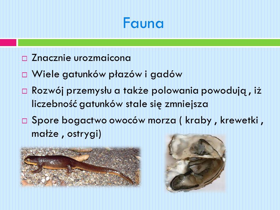 Fauna  Znacznie urozmaicona  Wiele gatunków płazów i gadów  Rozwój przemysłu a także polowania powodują, iż liczebność gatunków stale się zmniejsza