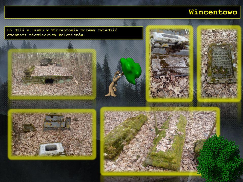 Wincentowo Do dziś w lasku w Wincentowie możemy zwiedzić cmentarz niemieckich kolonistów. Do dziś w lasku w Wincentowie możemy zwiedzić cmentarz niemi