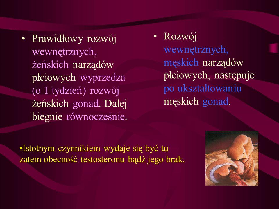 Prawidłowy rozwój wewnętrznych, żeńskich narządów płciowych wyprzedza (o 1 tydzień) rozwój żeńskich gonad. Dalej biegnie równocześnie. Rozwój wewnętrz