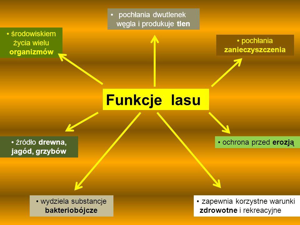 """Szczecin, dnia 09. 03. 2015 Konkurs multimedialny """"Przyjaciel Lasu"""""""