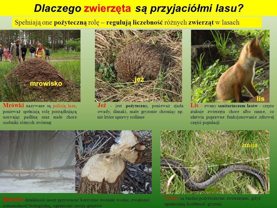 Aby las spełniał te wszystkie ważne funkcje, potrzebni są przyjaciele którzy będą dbali o las PRZYJACIÓŁMI LASU SĄ: ZwierzętaLeśnicyStraż leśna Nauczyciele Mikroorganizmy BEZKRĘGOWCE (pszczoły, chrząszcze, mrówki) GADY (jaszczurki, węże) PŁAZY (żaby, ropuchy ) PTAKI ( dzięcioły, sójki, sikory, kosy, drozdy, szpaki, zięby, myszołowy, jastrzębie, krogulce, sowy) SSAKI (dziki, myszy, nornice, jeżowate) rozkładające i mineralizujące martwą materię organiczną