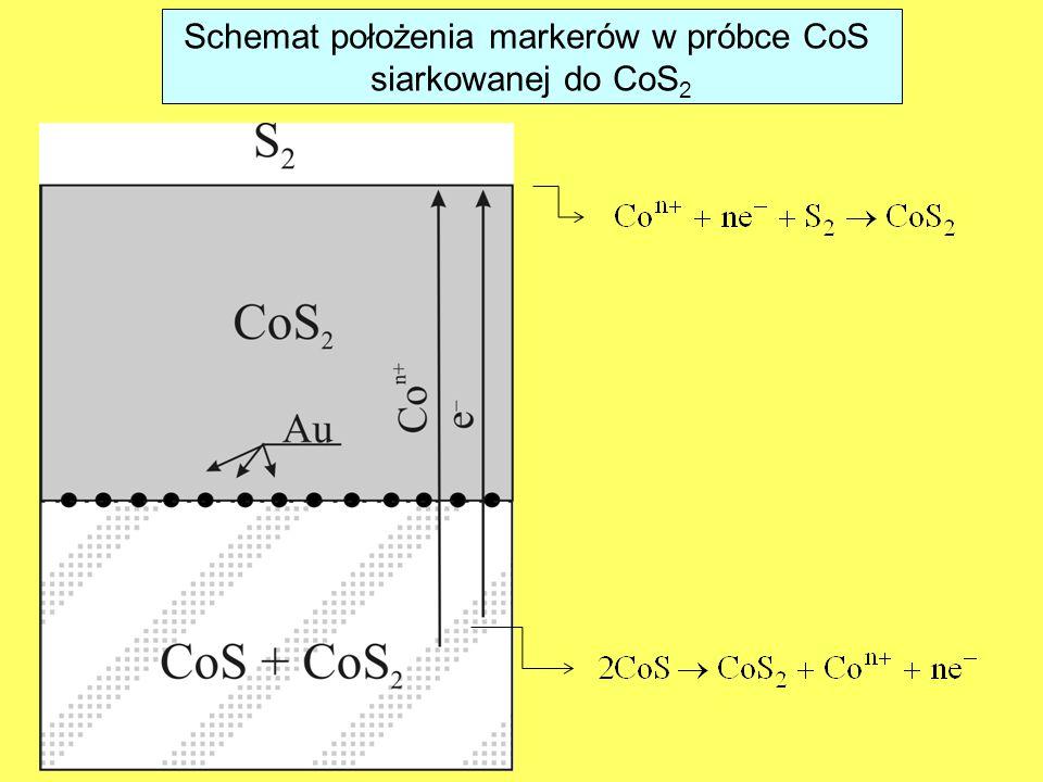 Schemat położenia markerów w próbce CoS siarkowanej do CoS 2
