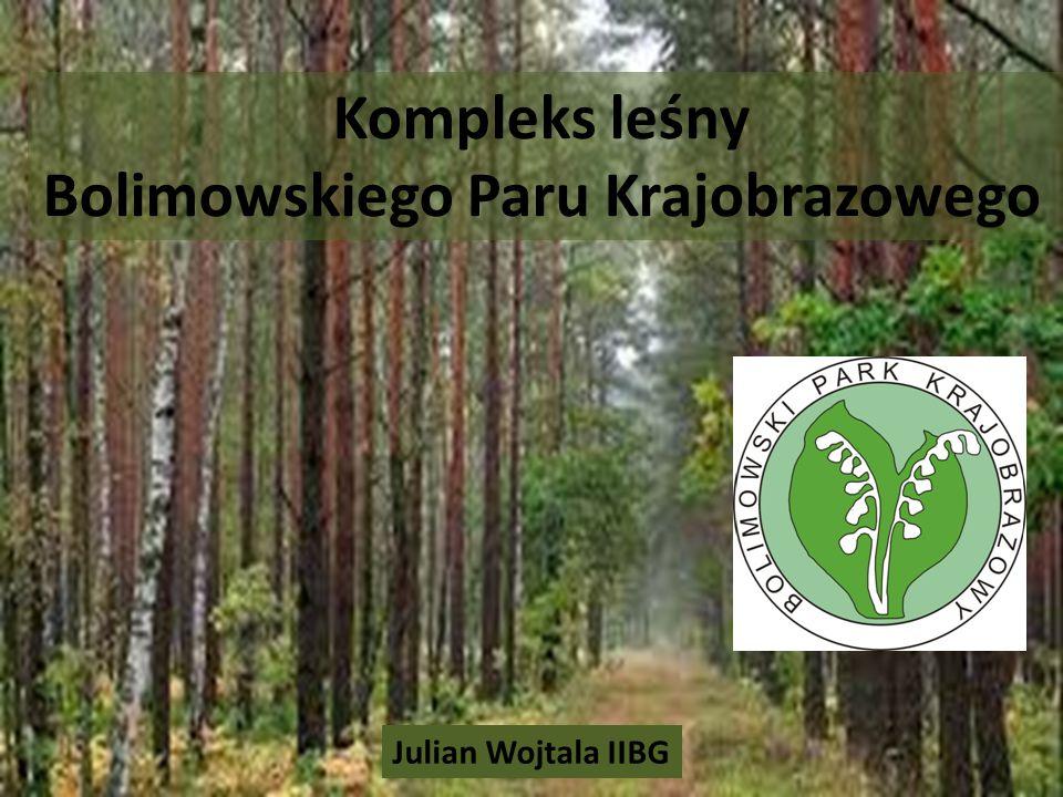 Kompleks leśny Bolimowskiego Paru Krajobrazowego Julian Wojtala IIBG