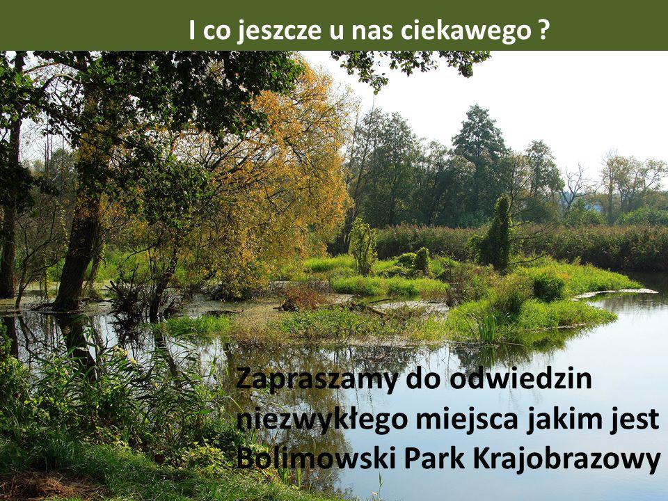 62 gniazda bociana białego, 1 aleja zabytkowa i liczne drzewa – pomniki przyrody, 15 ścieżek edukacyjnych, 23 szlaki turystyczne, siedliska bobrów w d
