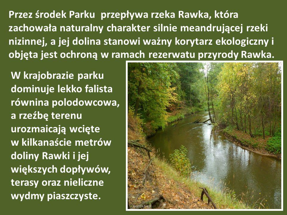Przez środek Parku przepływa rzeka Rawka, która zachowała naturalny charakter silnie meandrującej rzeki nizinnej, a jej dolina stanowi ważny korytarz