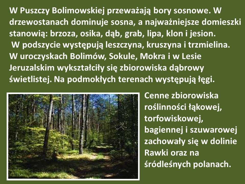 W Puszczy Bolimowskiej przeważają bory sosnowe. W drzewostanach dominuje sosna, a najważniejsze domieszki stanowią: brzoza, osika, dąb, grab, lipa, kl