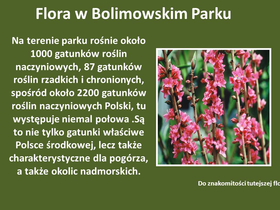 Flora w Bolimowskim Parku Na terenie parku rośnie około 1000 gatunków roślin naczyniowych, 87 gatunków roślin rzadkich i chronionych, spośród około 2200 gatunków roślin naczyniowych Polski, tu występuje niemal połowa.Są to nie tylko gatunki właściwe Polsce środkowej, lecz także charakterystyczne dla pogórza, a także okolic nadmorskich.