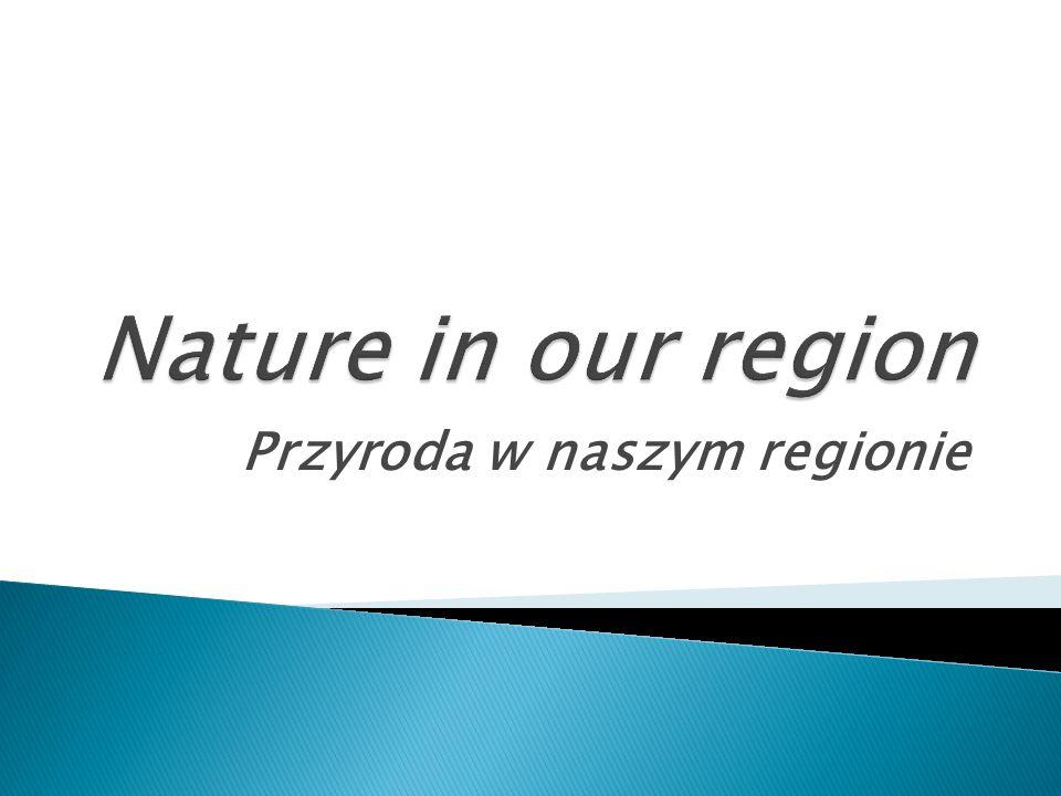 Przyroda w naszym regionie