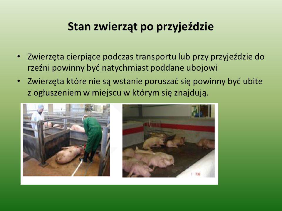 Stan zwierząt po przyjeździe Zwierzęta cierpiące podczas transportu lub przy przyjeździe do rzeźni powinny być natychmiast poddane ubojowi Zwierzęta k