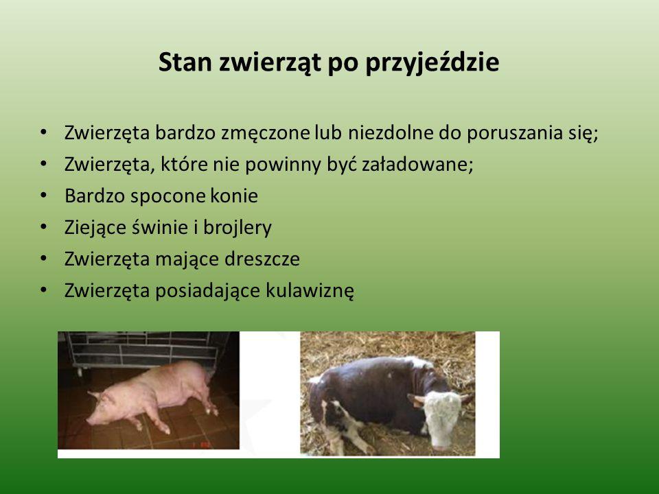 Stan zwierząt po przyjeździe Zwierzęta cierpiące podczas transportu lub przy przyjeździe do rzeźni powinny być natychmiast poddane ubojowi Zwierzęta które nie są wstanie poruszać się powinny być ubite z ogłuszeniem w miejscu w którym się znajdują.