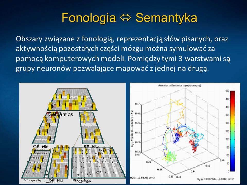 Fonologia  Semantyka Obszary związane z fonologią, reprezentacją słów pisanych, oraz aktywnością pozostałych części mózgu można symulować za pomocą k