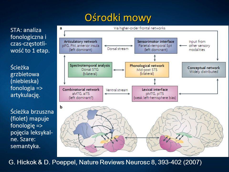 Język i kora Obszary lewej półkuli mózgu aktywowane bezpośrednio w czasie słuchania czy czytania słów.