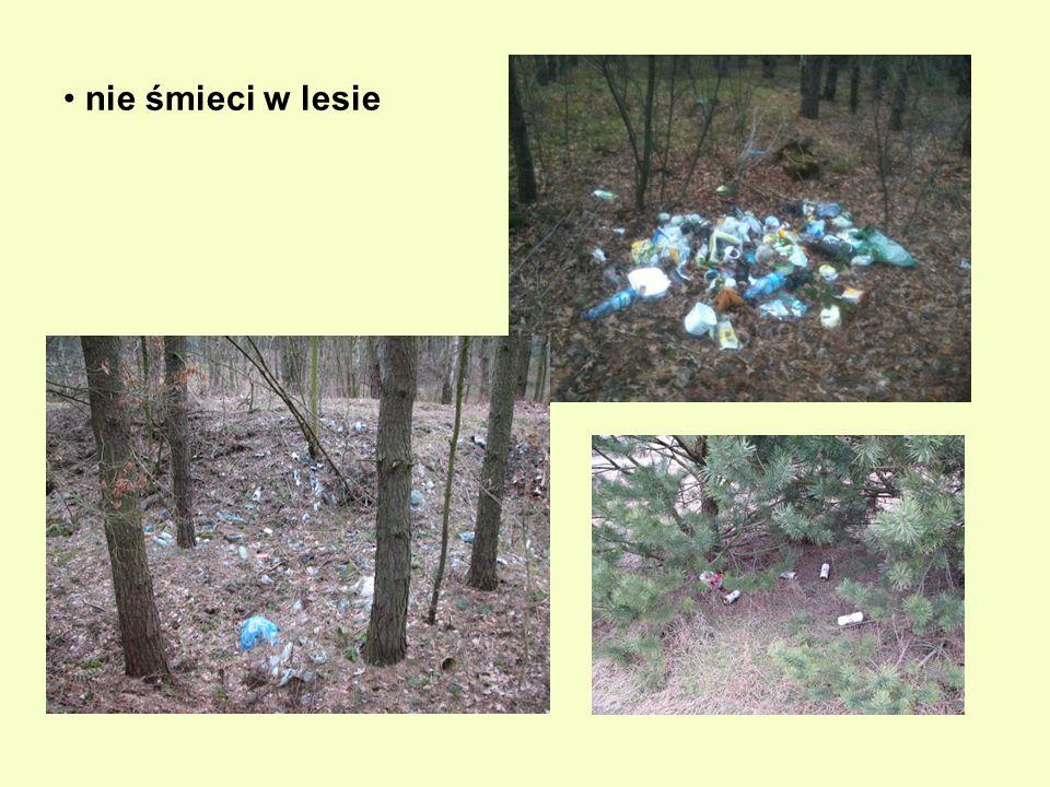 nie śmieci w lesie