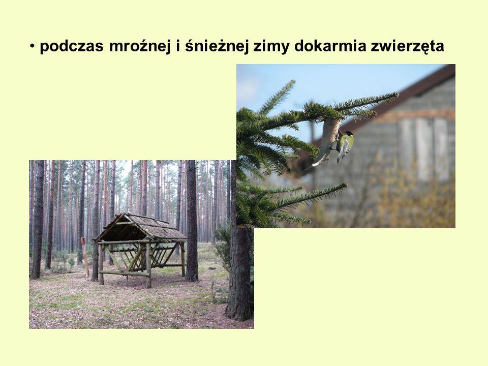 rozwiesza budki lęgowe dla ptaków, bo wielu gatunkom coraz trudniej znaleźć naturalne warunki do założenia gniazda
