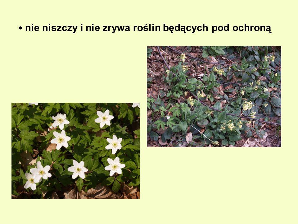 nie niszczy i nie zrywa roślin będących pod ochroną
