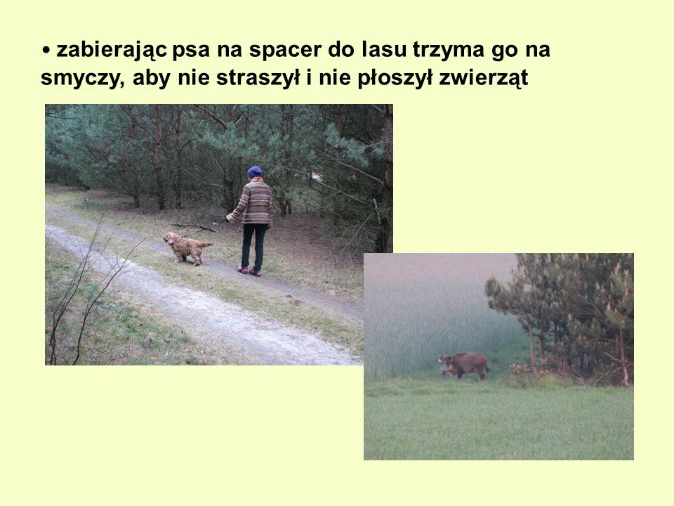 zabierając psa na spacer do lasu trzyma go na smyczy, aby nie straszył i nie płoszył zwierząt