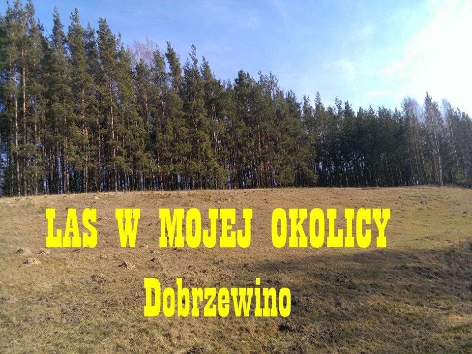 LAS W MOJEJ OKOLICY Dobrzewino