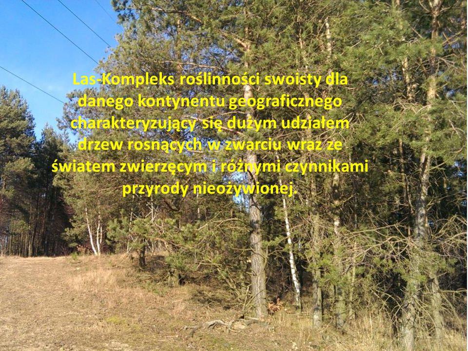 Las-Kompleks roślinności swoisty dla danego kontynentu geograficznego charakteryzujący się dużym udziałem drzew rosnących w zwarciu wraz ze światem zw
