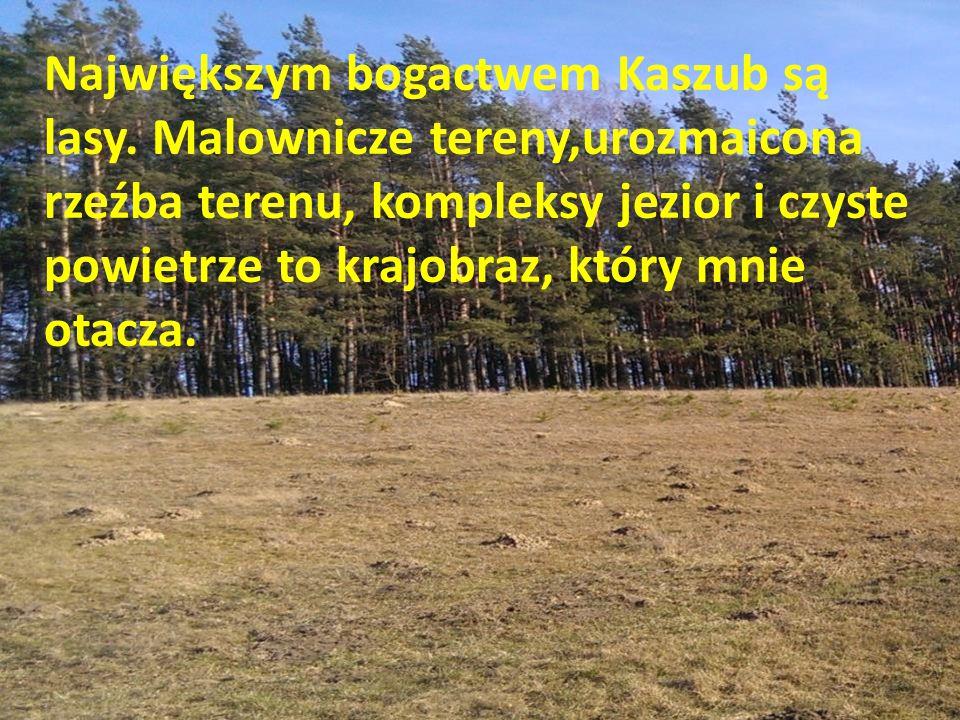 Największym bogactwem Kaszub są lasy.