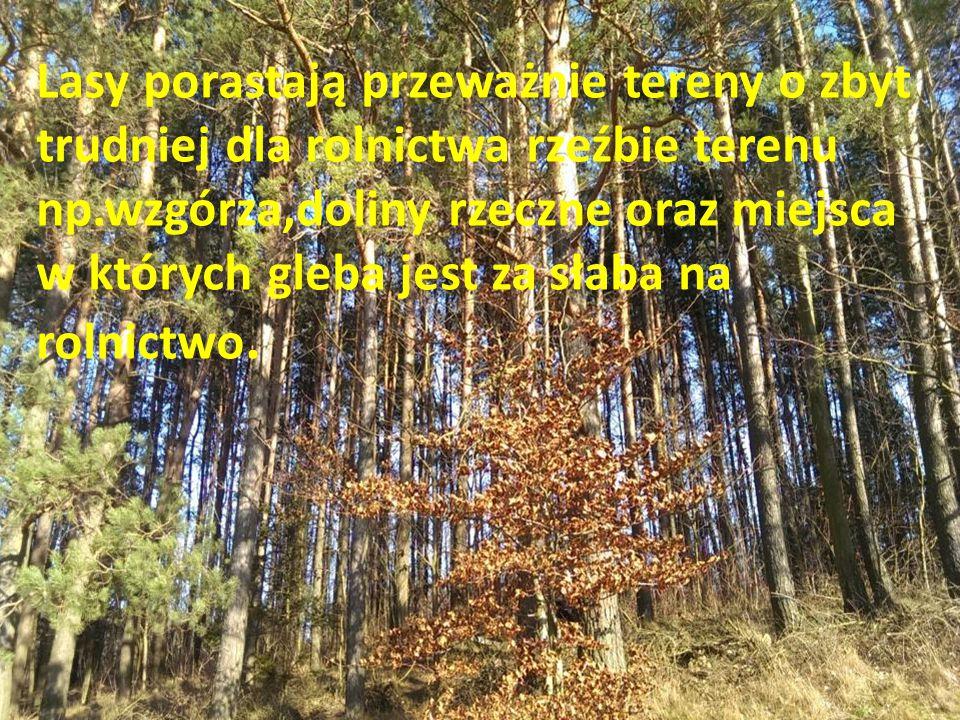 Lasy porastają przeważnie tereny o zbyt trudniej dla rolnictwa rzeźbie terenu np.wzgórza,doliny rzeczne oraz miejsca w których gleba jest za słaba na