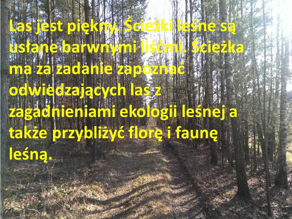Las jest piękny. Ścieżki leśne są usłane barwnymi liśćmi. Ścieżka ma za zadanie zapoznać odwiedzających las z zagadnieniami ekologii leśnej a także pr