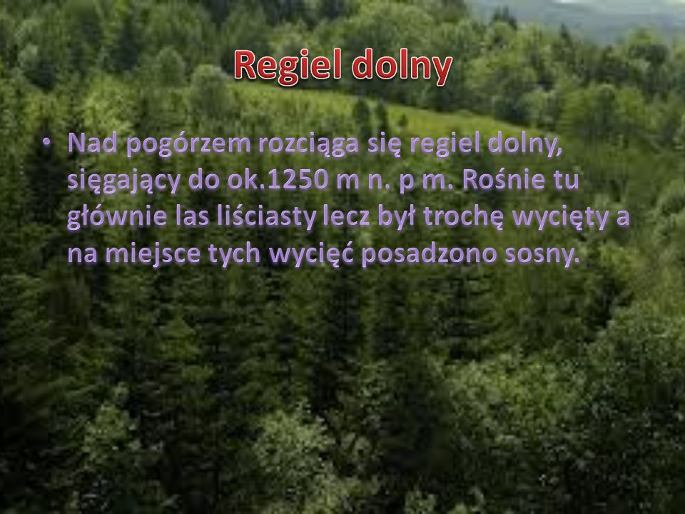 Regiel górny Nad reglem dolnym znajduje się regiel górny, który sięga do ok.1550 m n.