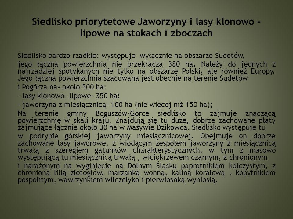 Lilia złotogłów Pełnik europejski Górska jaworzyna mięsięcznicowa w Masywie Dzikowca