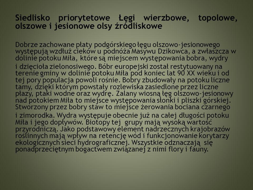 """Kukułka szerokolistna Pierwiosnek wyniosły """"Stawy bobrowe – w rozlewisku Potoku Miła- Masyw Dzikowca"""