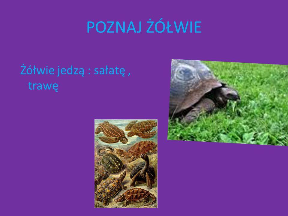 Wiersz Żółw, jak z pewnością wiecie, najdłużej żyje na świecie.