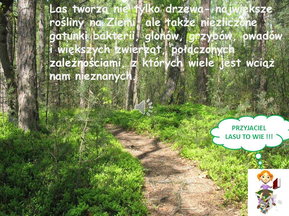 Kto jest przyjacielem lasu.PRZYJACIEL LASU ZNA LAS.